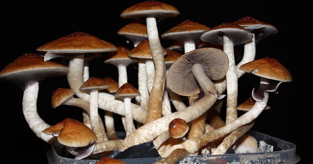 une-champignons
