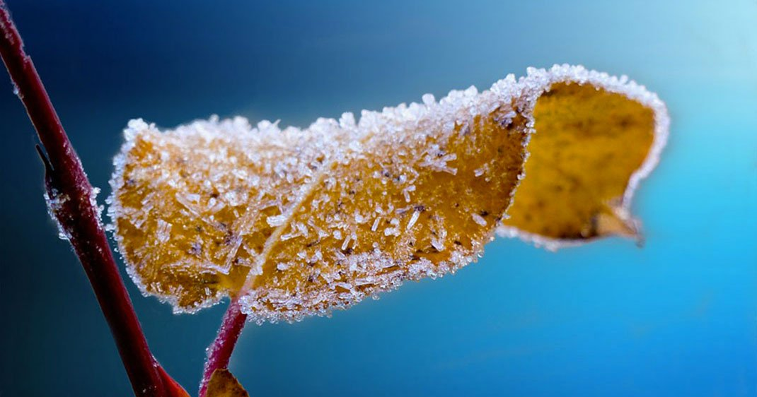une-glace-feuille