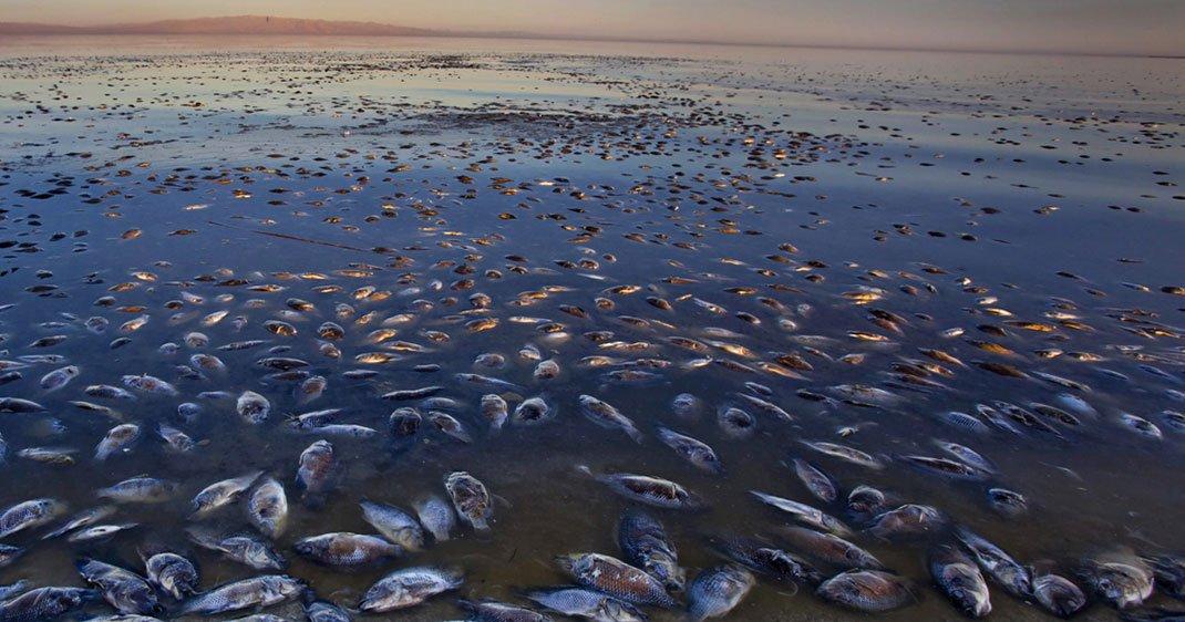une-poissons-morts