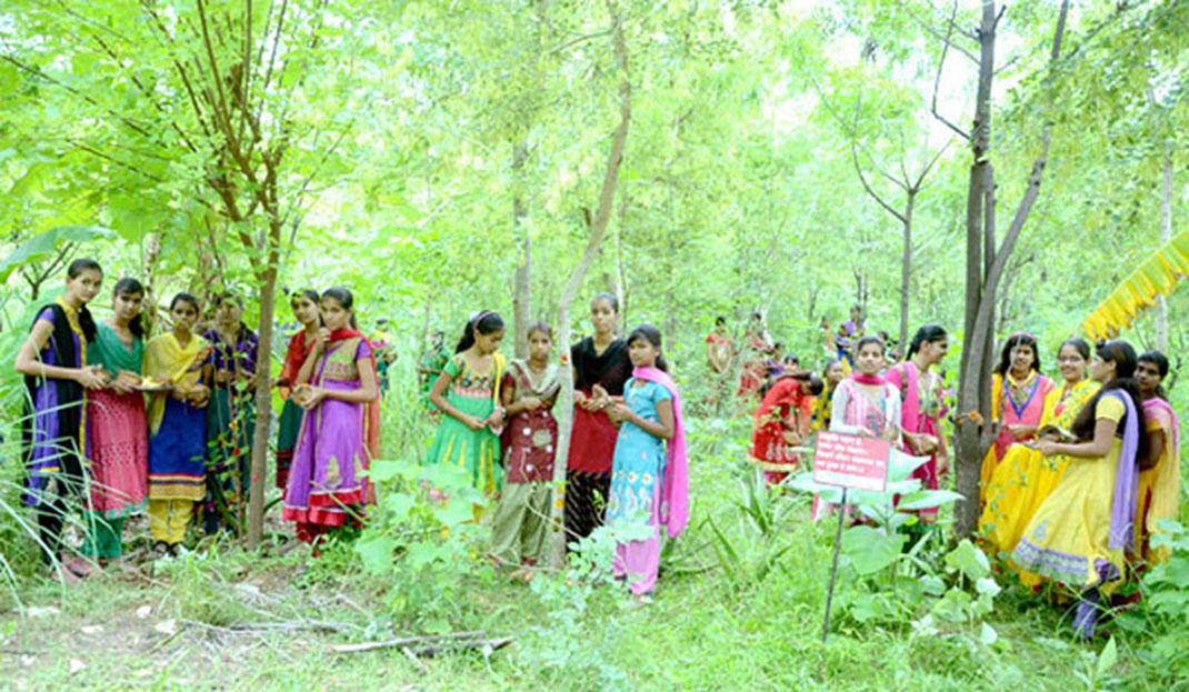 village-indien-arbres-2