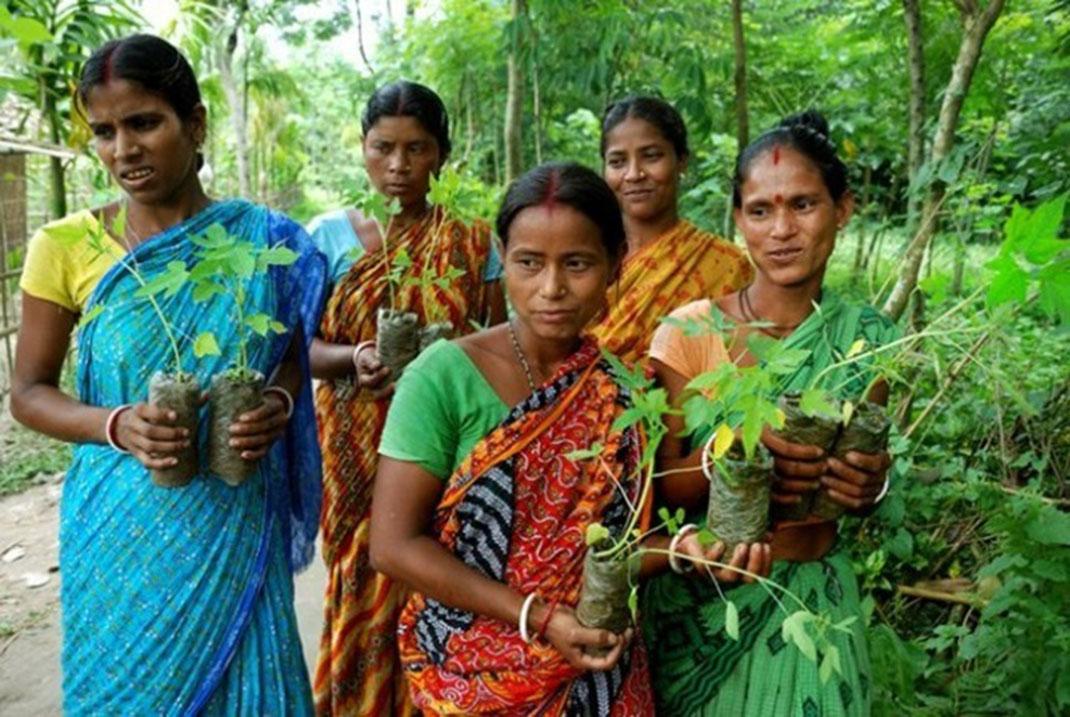 village-indien-arbres-3