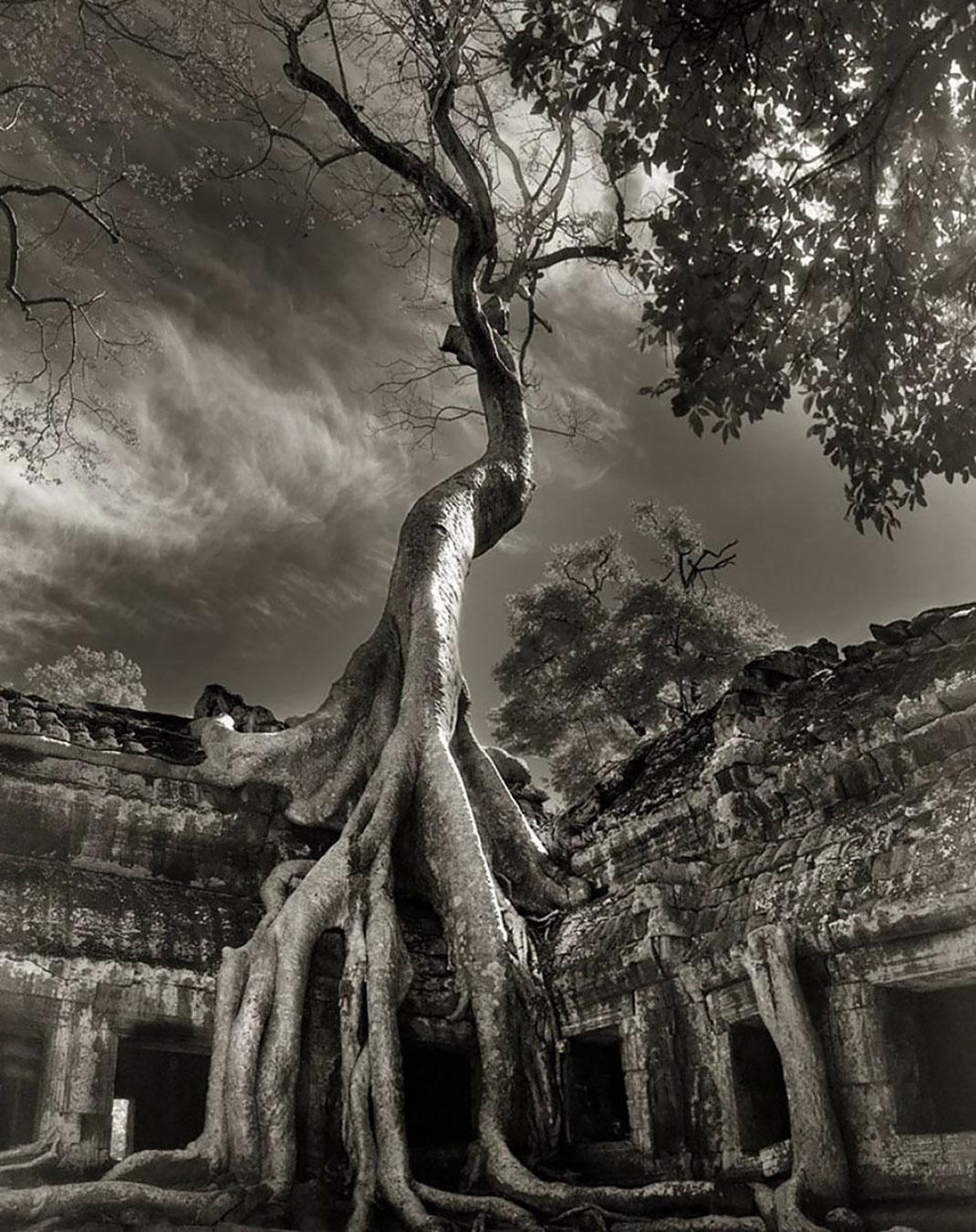 Ancien-arbre-10