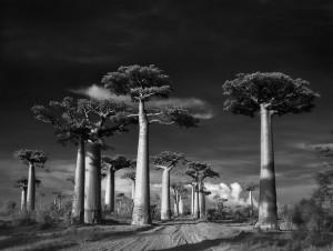 Ancien-arbre-2