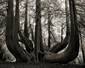 Ancien-arbre-6