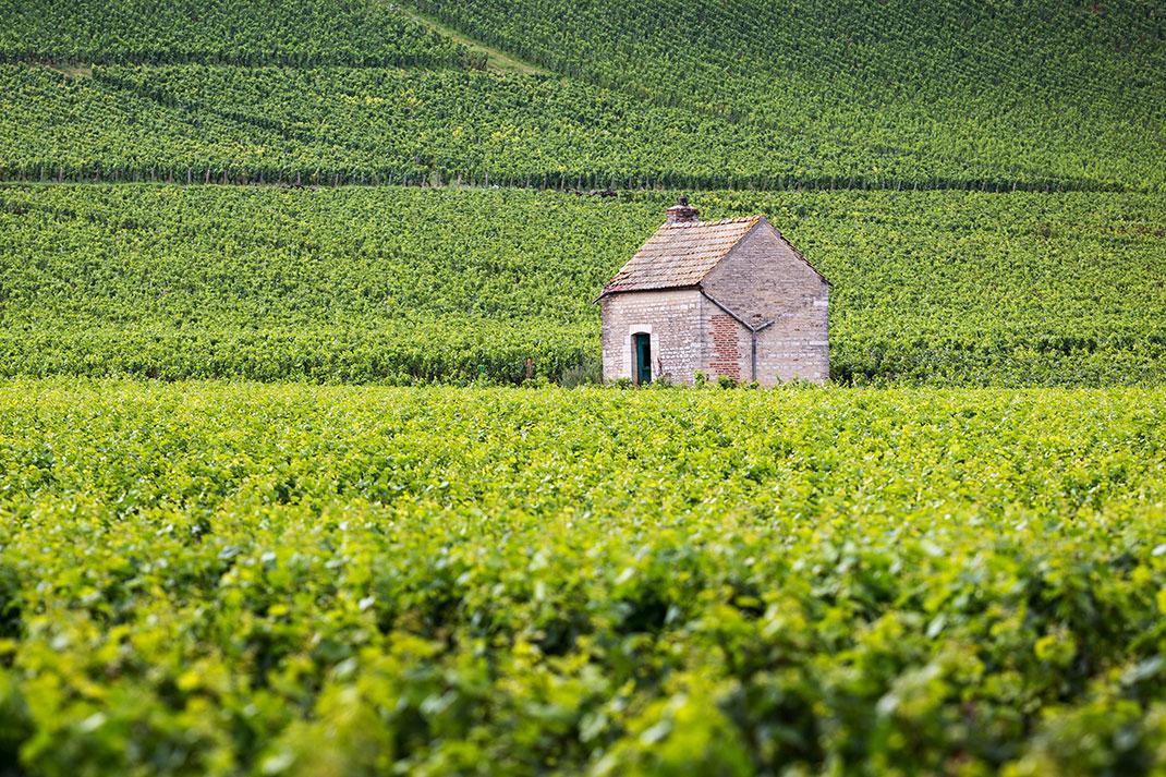 Les vignes de Beaune via Shutterstock
