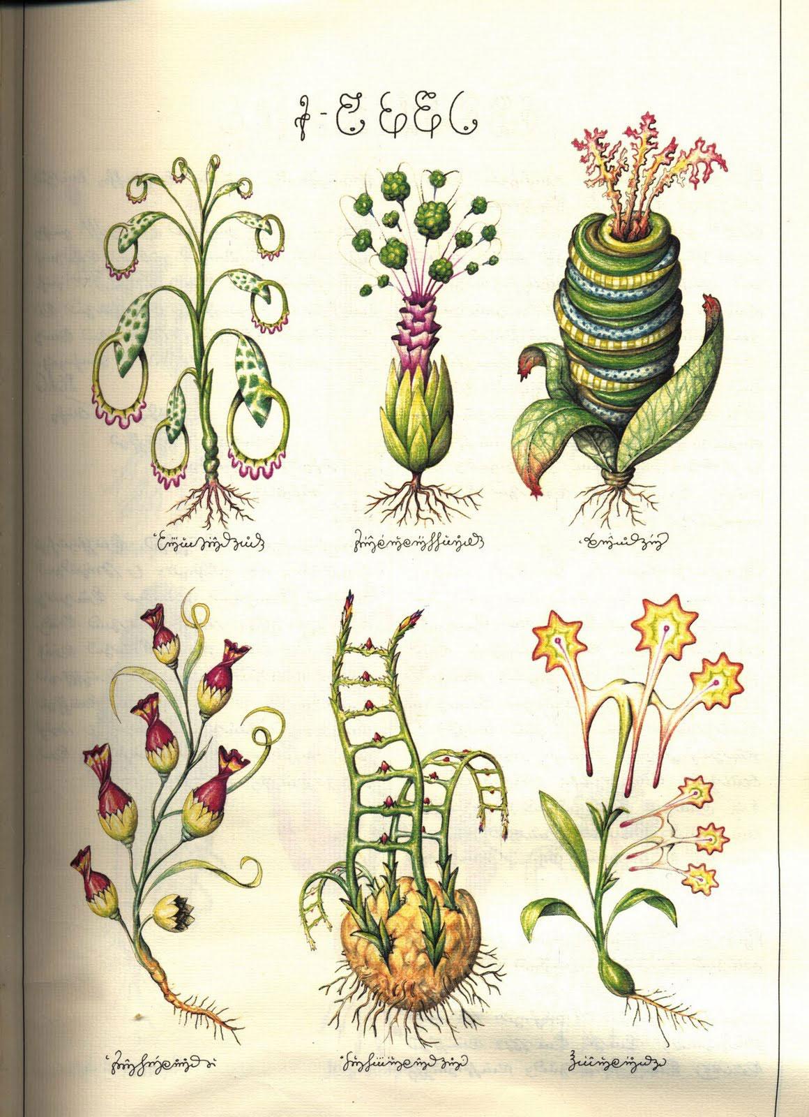 Codex-Seraphinianus-19