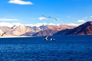 Le lac Pangong Tso dans l'Himalaya via Shutterstock