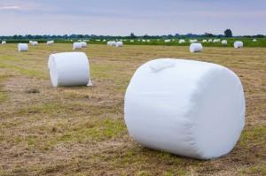 Des emballages de mottes de foin via Shutterstock