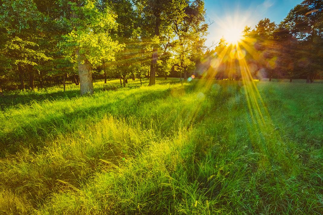 Une forêt via Shutterstock