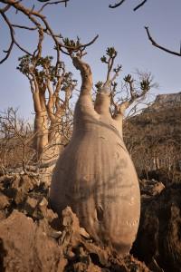Socotra-2
