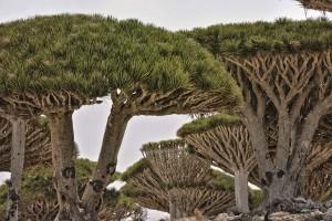 Socotra-4