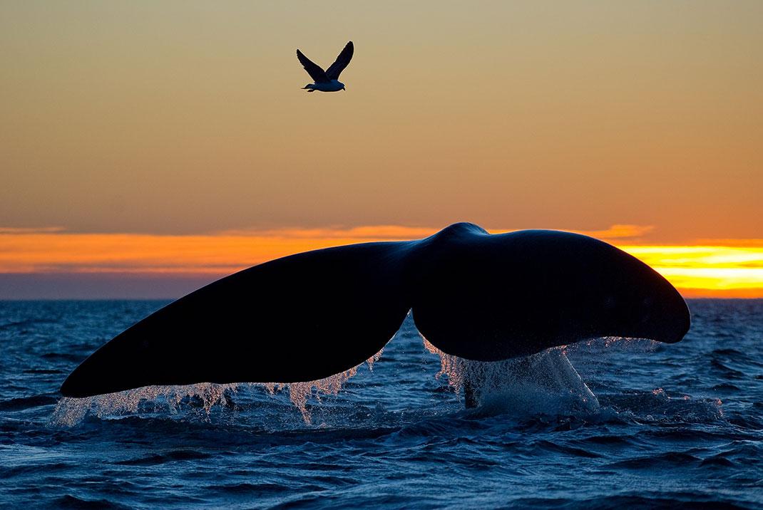 baleine-oiseau-ocean