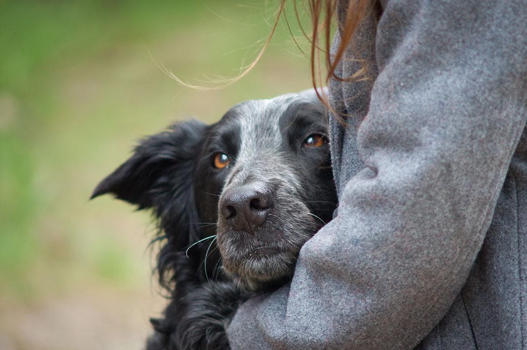 L'amitié entre un chien et son maître via Shutterstock