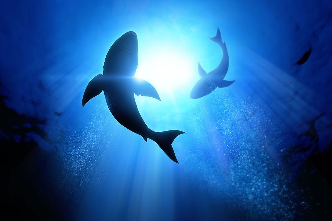 Des requins via Shutterstock