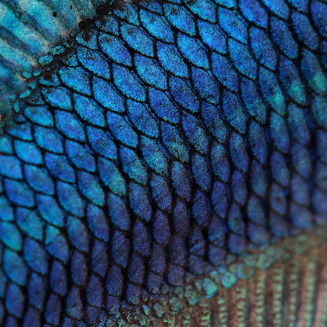 Des écailles de poisson via Shutterstock
