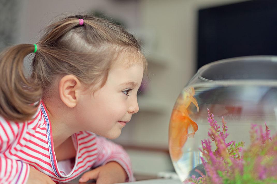 Une petite fille devant un aquarium via Shutterstock