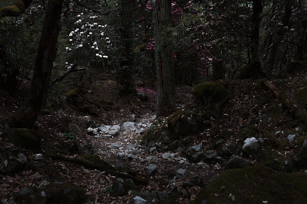©Lionel Prado