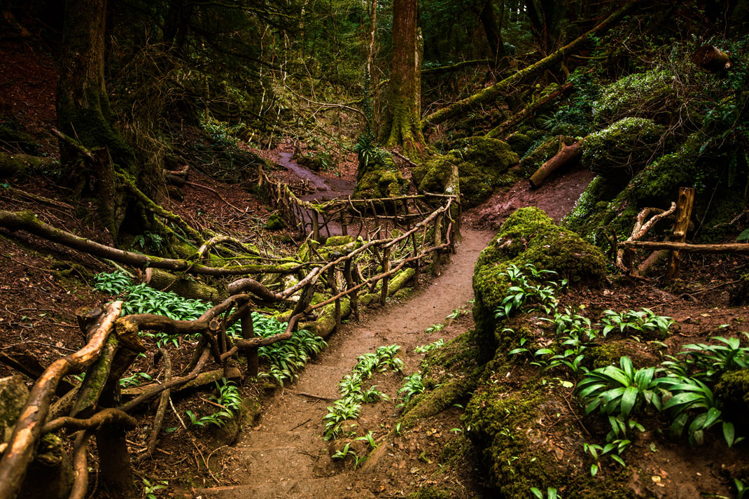 La forêt de Puzzlewood en Angleterre via Shutterstock