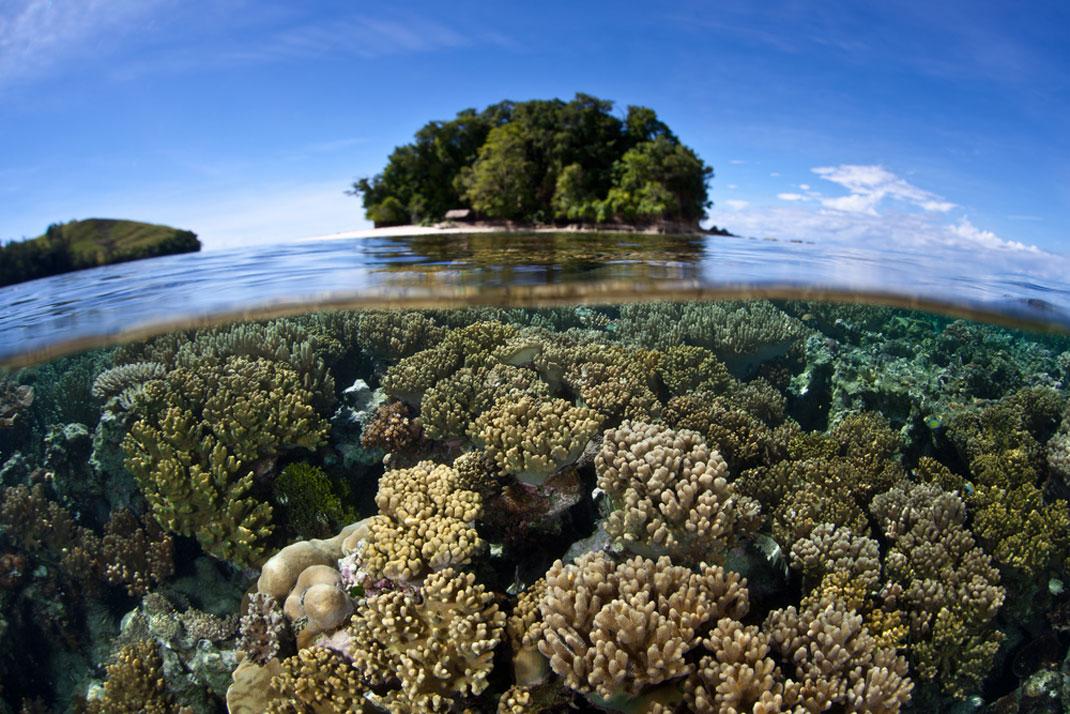 Des coraux dans les eaux des îles Salomon via Shutterstock