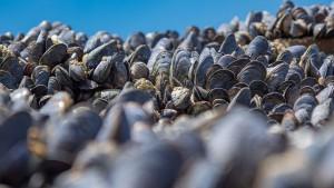 Disparition des moules via Shutterstock