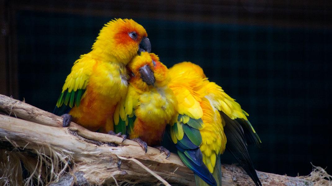 oiseaux-2