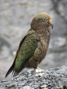 oiseaux-3