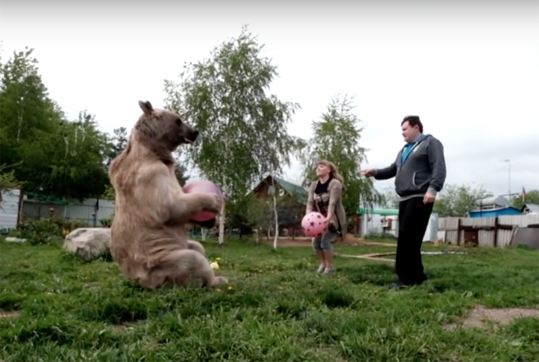 ours-adopter-russe-11