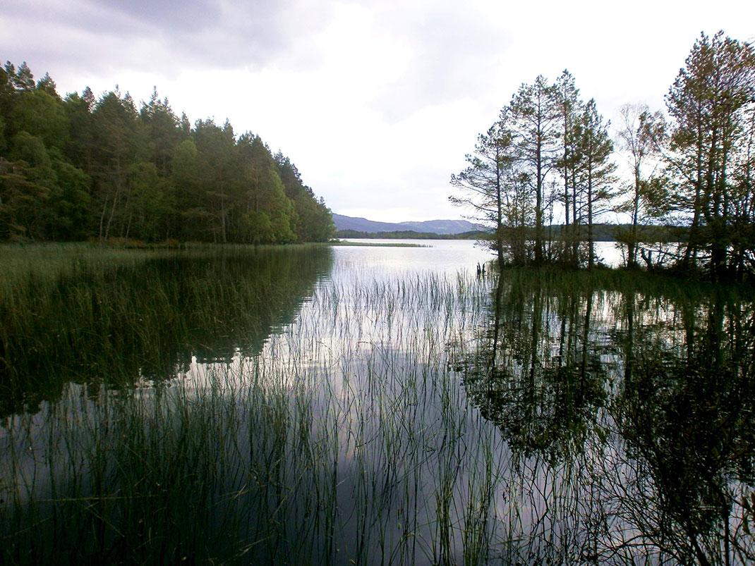 parc-cairngorms-ecosse-15