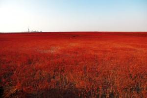 La Plage rouge de Chine via Shutterstock