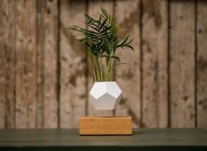 plantes-leviter-1