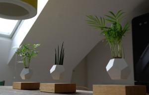plantes-leviter-2
