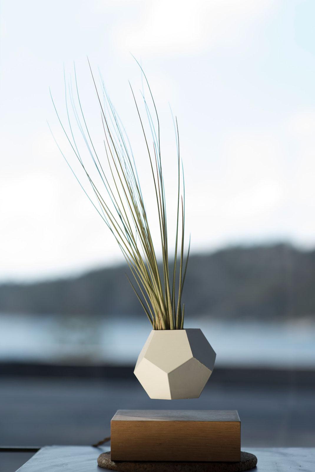 plantes-leviter-3