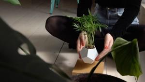 plantes-leviter-4