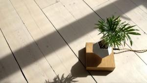 plantes-leviter-5
