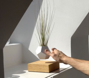 plantes-leviter-6