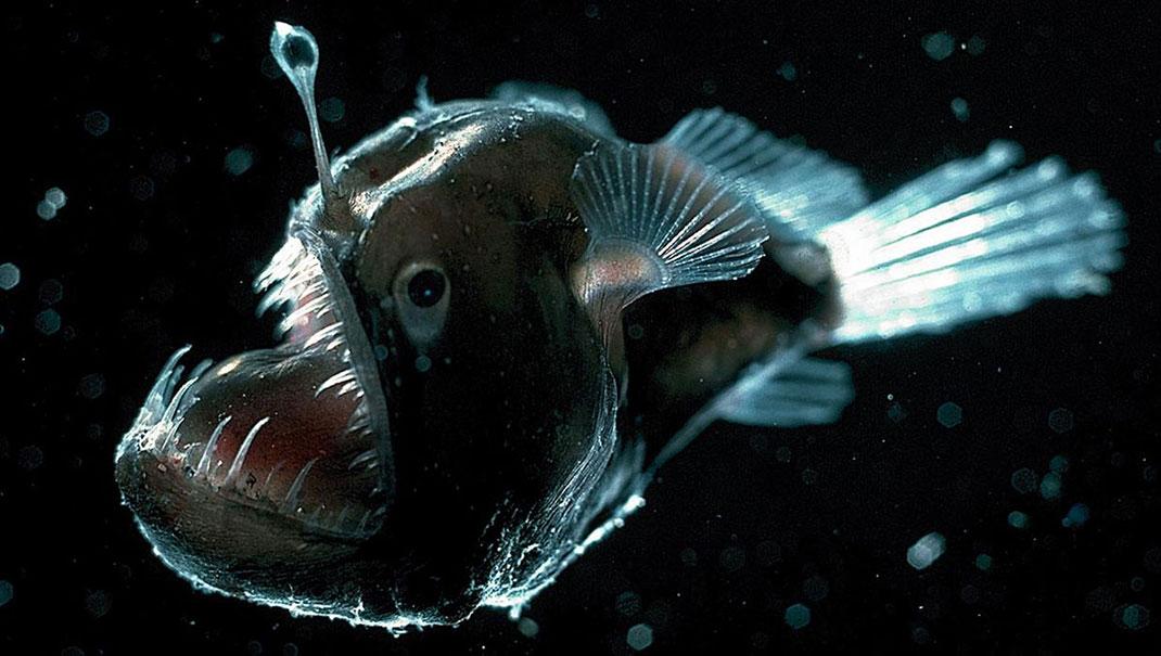 poisson-abysses1