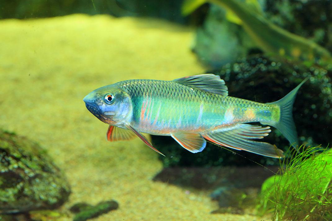 Un poisson via Shutterstock