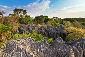 La réserve naturelle intégrale de Tsingy de Bemaraha via Shutterstock