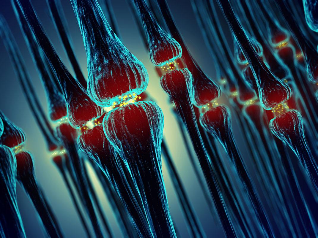 Des synapses via Shutterstock