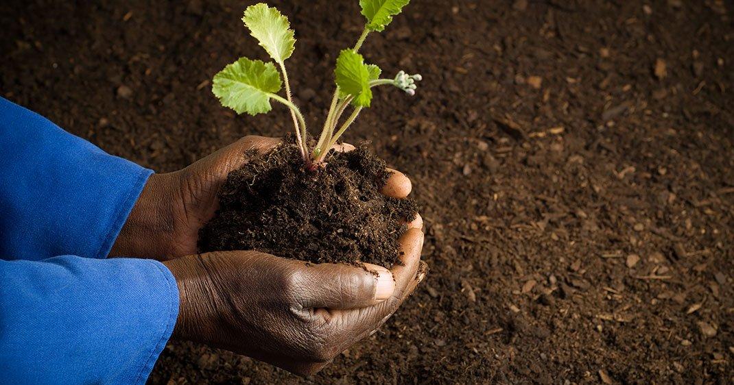 voici comment les africains rendent leur sol fertile sans. Black Bedroom Furniture Sets. Home Design Ideas