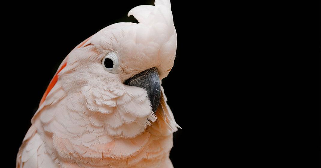 une-oiseaux-1