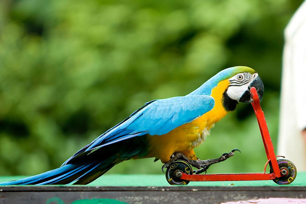 une-perroquet