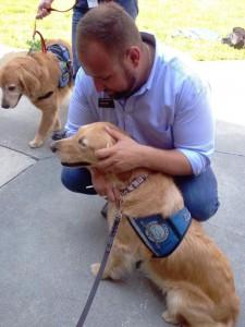unite-chiens-reconfort-12