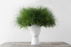 vases-tete-plantes-insolite-7