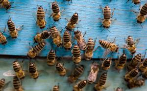 Un essaim d'abeilles via Shutterstock