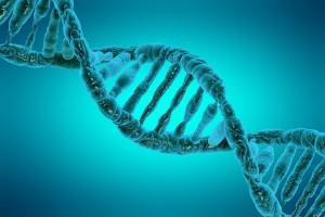 Un fragment d'ADN via Shutterstock