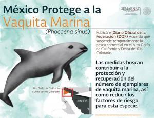Une affiche pour la protection de la vaquita