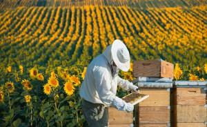 Un apiculteur via Shutterstock