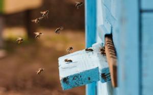 Une ruche via Shutterstock