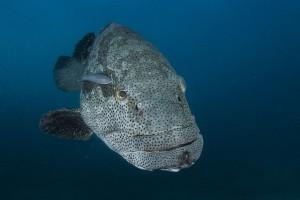 Une espèce sous marine via Shutterstock
